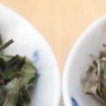 différents thés blancs du Népal