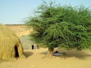 Lieu de repos sous l'acacia