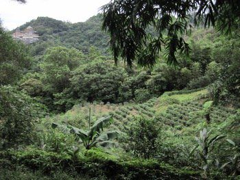 chemin à Maokong