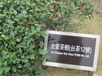 Théier Jinxuan