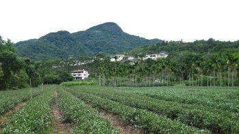 plantations 2