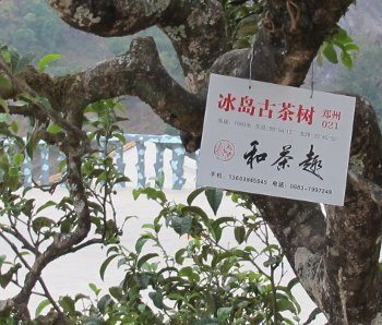 Pancarte d'identification sur un arbre à thé