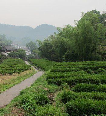 Village et plantations de Long Jing