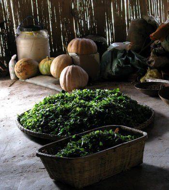 yunnan puerh