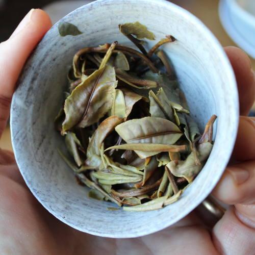 Thé blanc Bio du Hunan