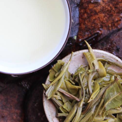 Thé vert du Yunnan printemps first flush