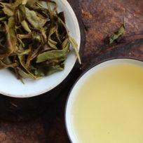 thé blanc du Népal