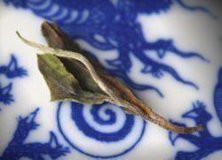 Thé blanc Népal Nuage de Jade