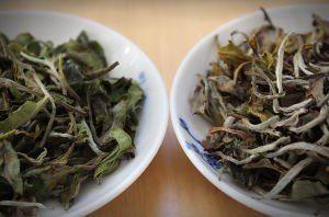 thé blanc Népal Bio 2014