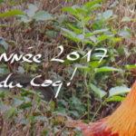 année du coq, meilleurs voeux