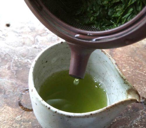 Gyokuro cultivar asatsuyu printemps 2018