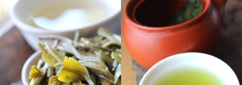 les nouveaux thés de 2018 dans notre catalogue