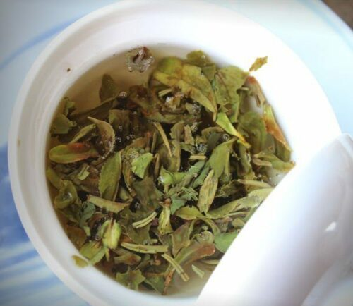 gaiwan infusion thé 1st flush inde