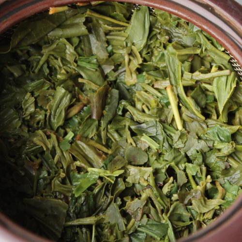 thé vert japon théiers zairaishu