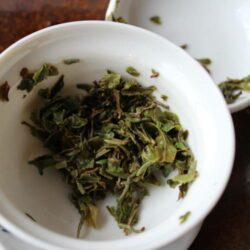 infusion en gaiwan d'un thé darjeeling de printemps