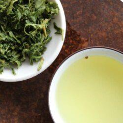 thé vert japonais de la famille Kadota