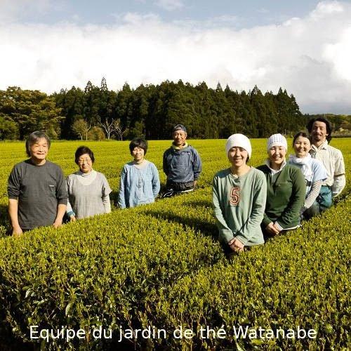 Mankichi Watanabe et son équipe dans les plantations de Yakushima