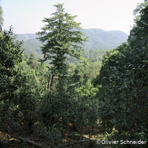 Jardin écologique de Yanuo