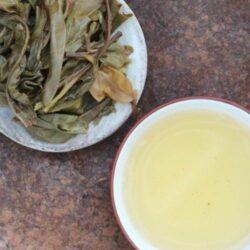 Thé puerh de vieux théiers gushu Thaïlande